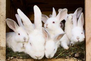 Hodowla zwierząt futerkowych – zasady zbilansowanej diety