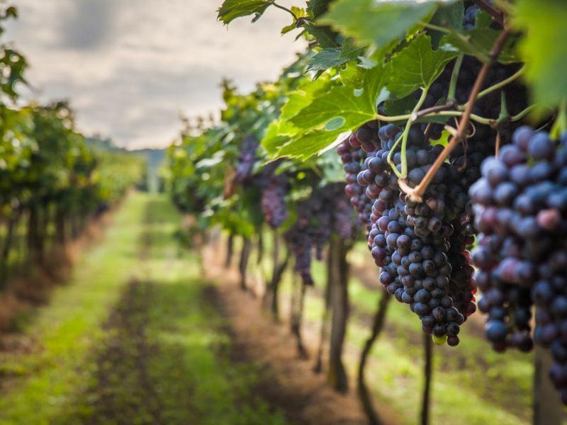 Kraje o największych tradycjach winiarskich