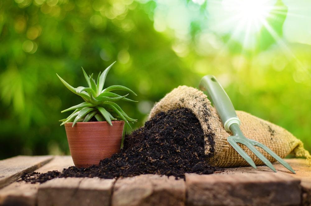 Nawozy organiczne do upraw i kwiatów – zalety
