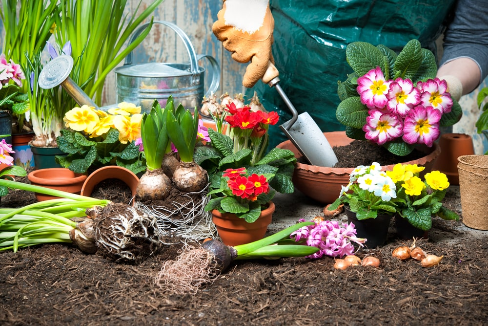 Jak dobrać odpowiednią ziemię do kwiatów doniczkowych? – poradnik